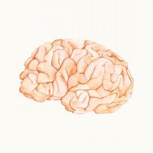 3 en cognitieve load theorie