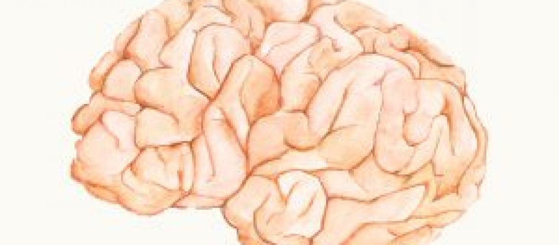 cognitieve load theorie